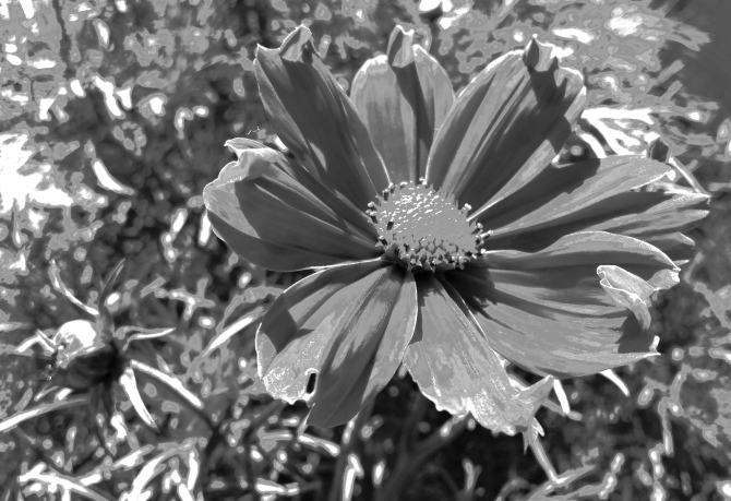 flower-power-bw-3-1
