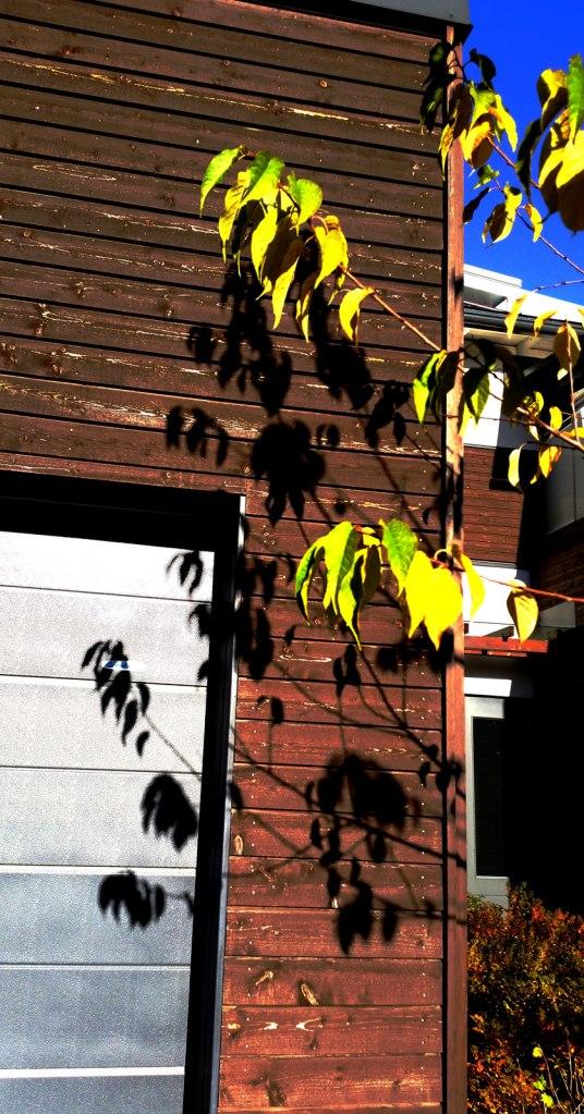 leaves-10