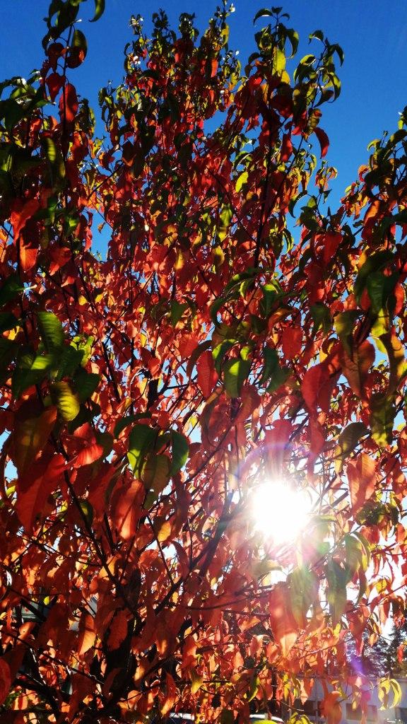 leaves-6