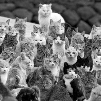 cats-a-many