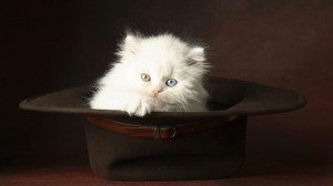 cats-hd-photo-wallpapers-5750_thumb