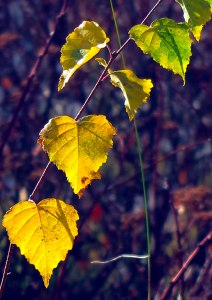 leaves-11