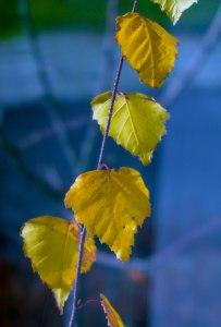 leaves-7