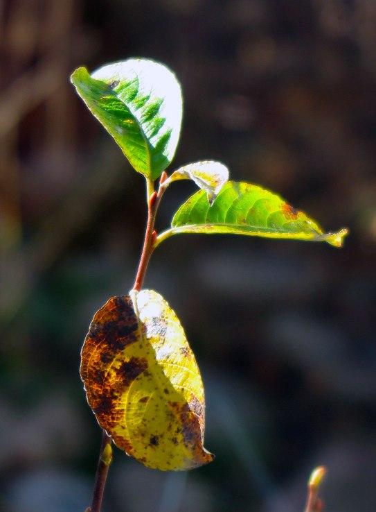 leaves-8