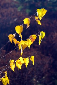 leaves-9