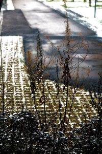 winter-wonderland-2