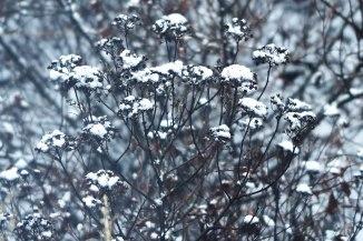 winter-wonderland-8