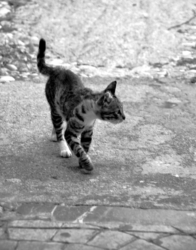 caturday-1