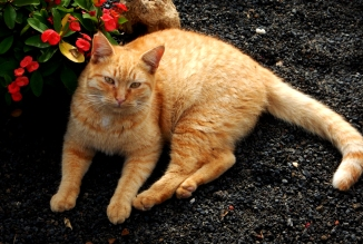 caturday-6