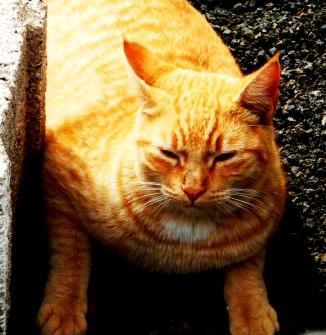 caturday-7