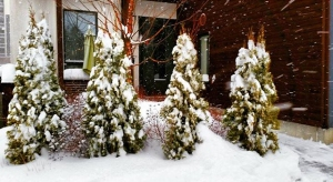 snowday-11