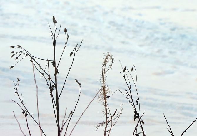 winter-morning_6