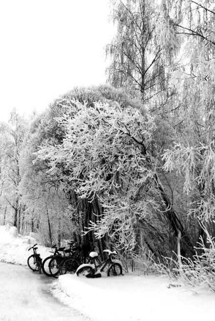 winter-winter-1