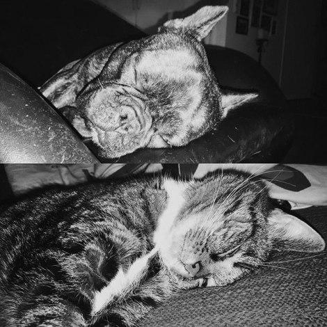 caturday-5