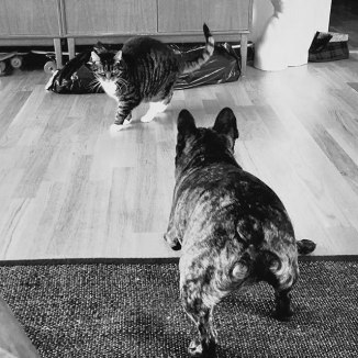 cats-and-dogs-6