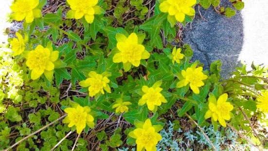 pretty-yellow-flowers
