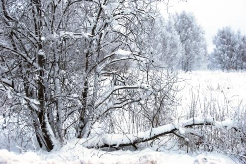 winter-tale-4