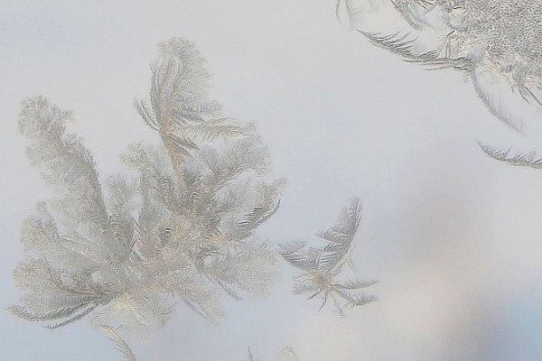 feathery-flecks-2