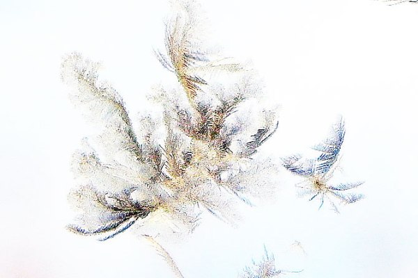 feathery-flecks-3