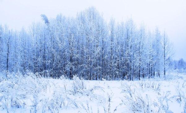 polar-day