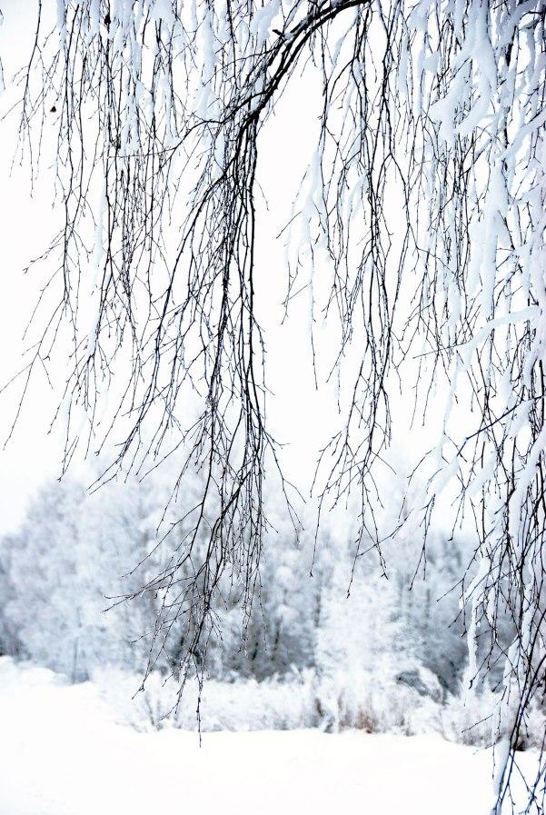 snow-day-10