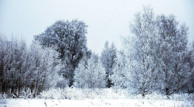 snow-day-8