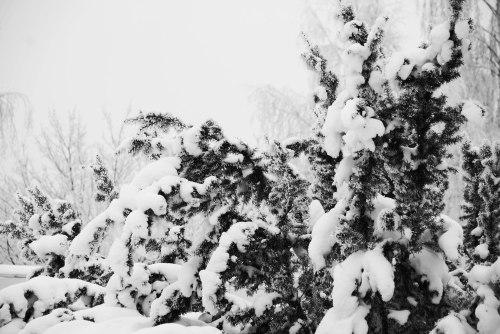 simply-snow-1