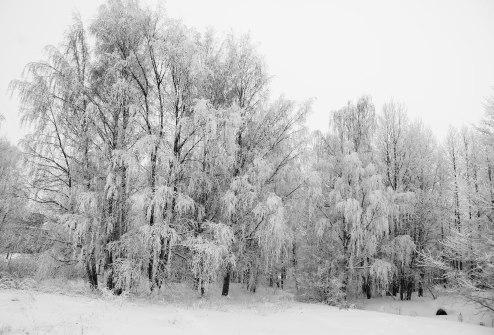 simply-snow-5
