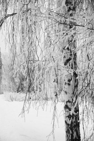 simply-snow-6