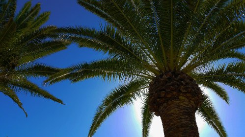 under-the-palm-trees