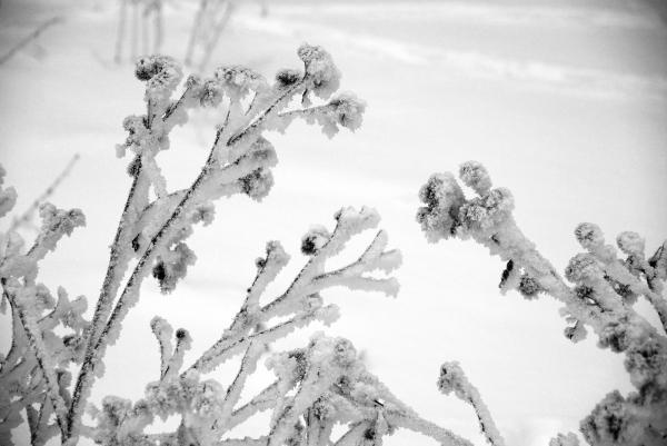 2-snow-dance
